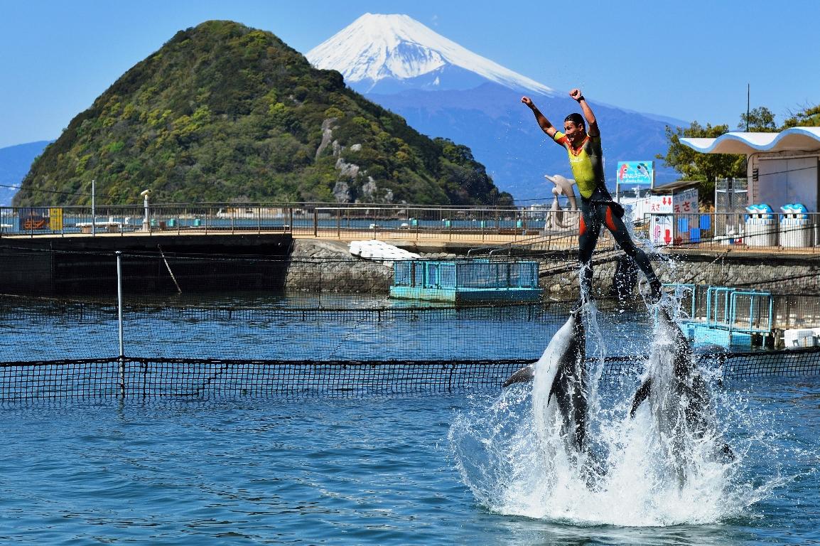 イルカの海ショーステージ